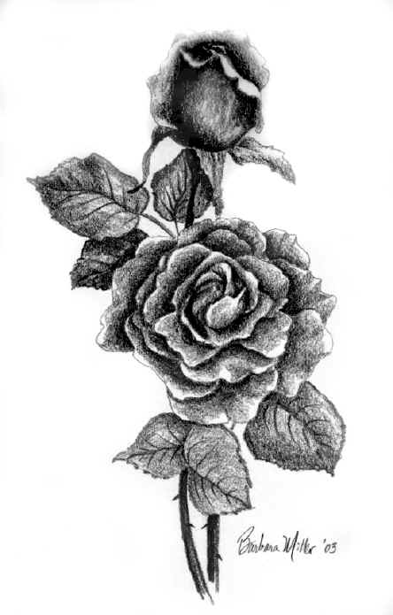 The Roses Barbara Miller Drawings - US $50.00. Submitted by StarDusty57